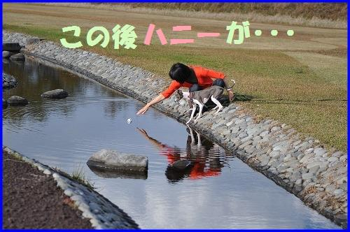 DSC_1121_20101125212646.jpg