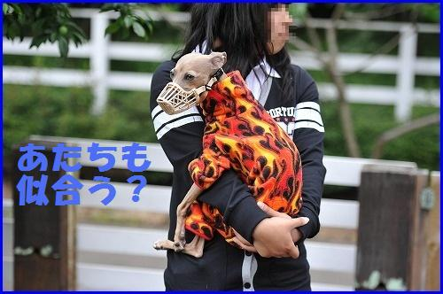 DSC_1626_20100604004848.jpg