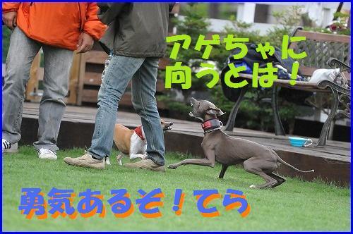 DSC_1680_20100602212910.jpg