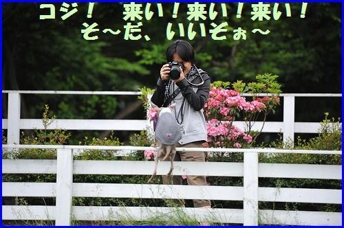 DSC_1719_20100604005105.jpg