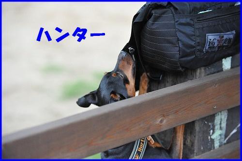 DSC_1738_20100604092755.jpg