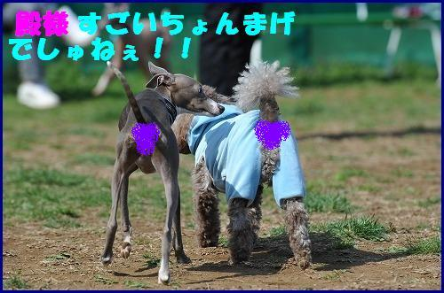 DSC_1938_20100328132932.jpg
