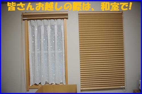 DSC_2013_20110118230239.jpg
