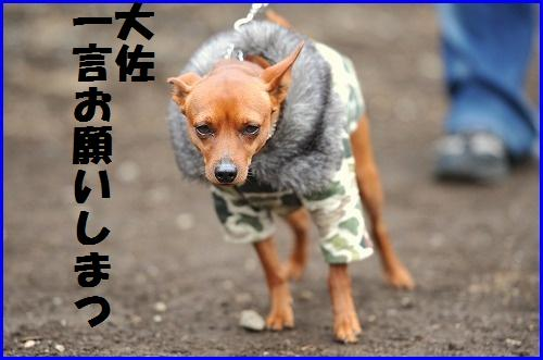 DSC_2542_20100407220207.jpg