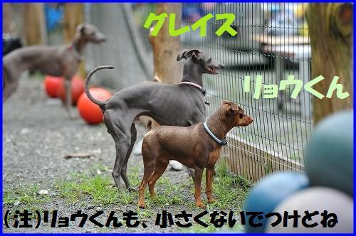 DSC_2730_20100812011851.jpg