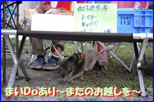 DSC_2797_20100812011926.jpg
