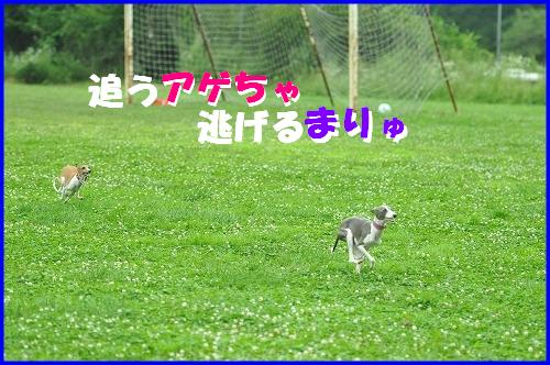 DSC_3073_20100820120650.jpg