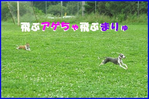 DSC_3075.jpg