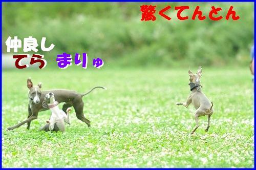 DSC_3097_20100820120653.jpg