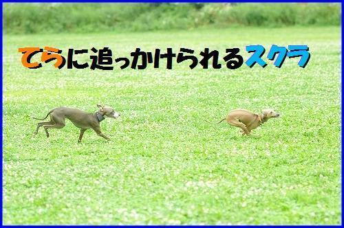 DSC_3202_20100820123005.jpg