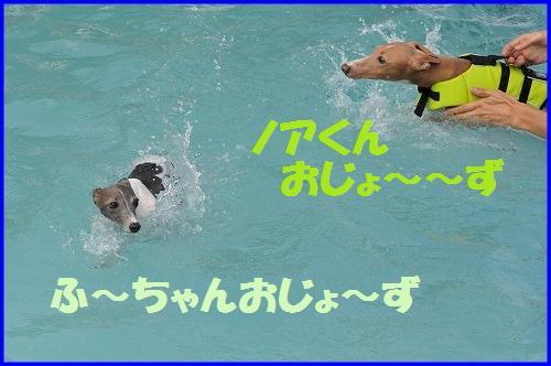 DSC_3535.jpg