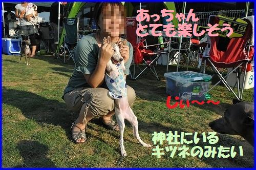 DSC_3660_20100827003445.jpg