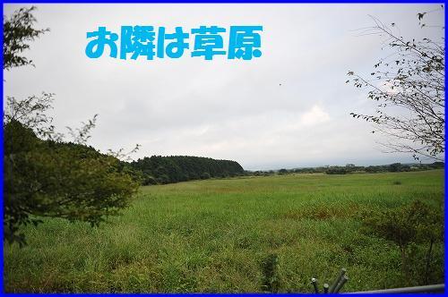 DSC_8018.jpg