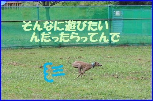 DSC_8108.jpg