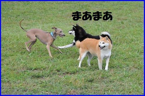 DSC_8111.jpg