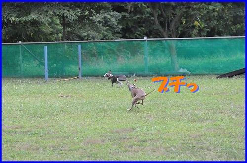 DSC_8173.jpg
