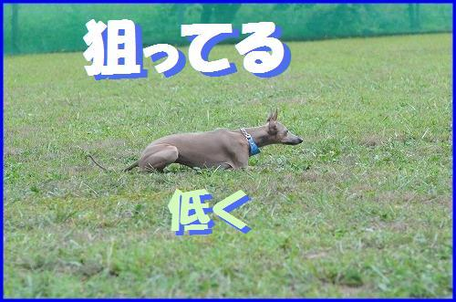 DSC_8180.jpg