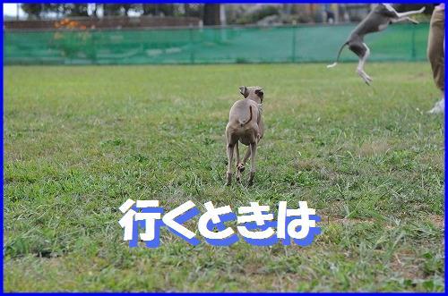 DSC_8207.jpg