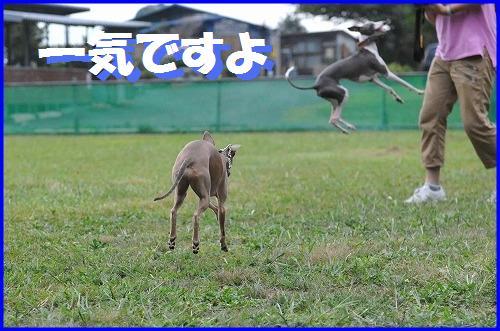 DSC_8208.jpg