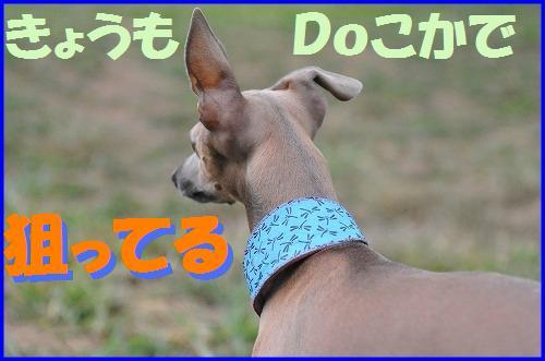 DSC_8217_20100909015951.jpg