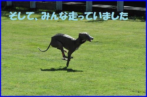 DSC_9354_20101013012036.jpg