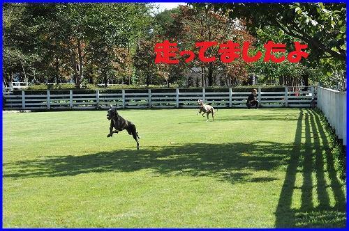DSC_9403_20101013012210.jpg
