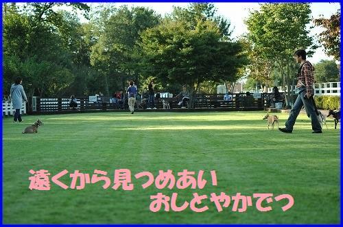 DSC_9513_20101013012411.jpg