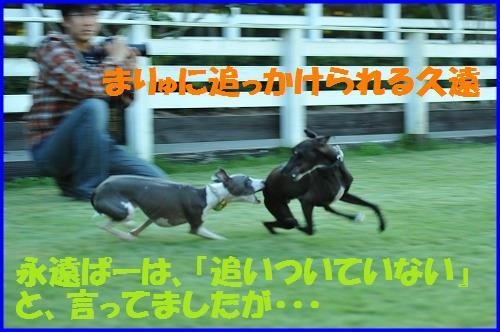 DSC_9543_20101013012544.jpg