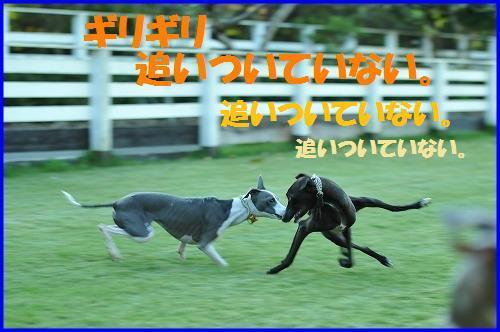 DSC_9544_20101013013200.jpg