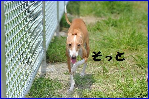 DSC_9795.jpg