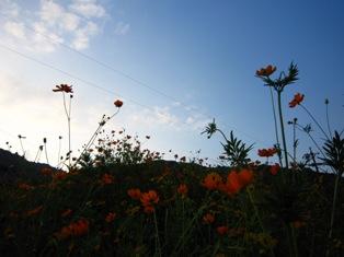 足助・・・空に向かう花