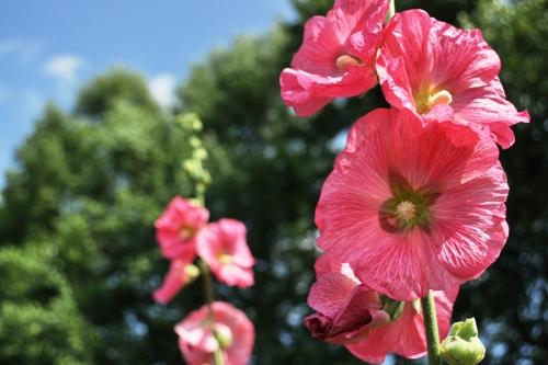 紫竹ガーデン5