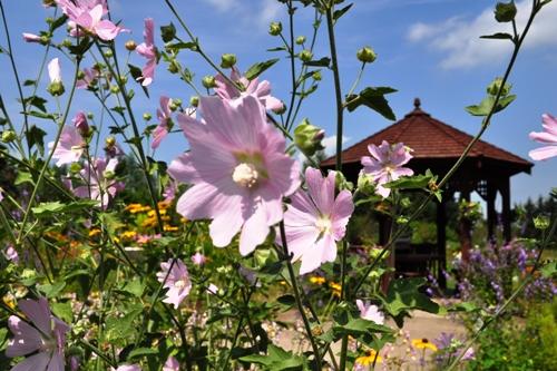 紫竹ガーデン3
