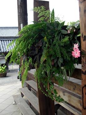 納経所の寄せ植え:穴太寺