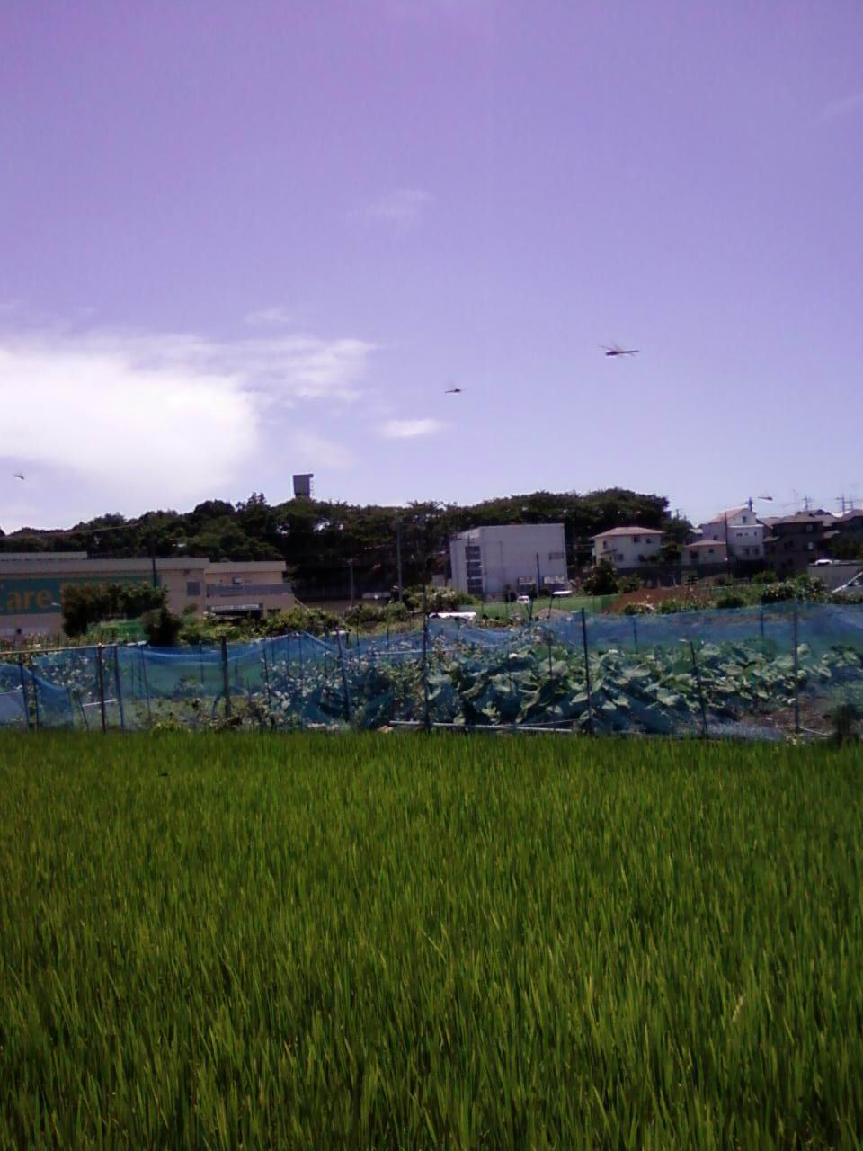トンボ1画像-0096[1]