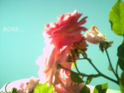 PICT0023-1.jpg