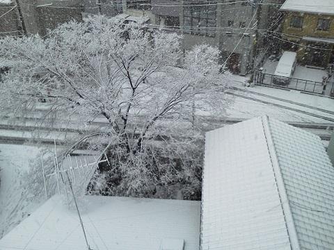 東京初雪!20130114