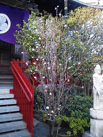 城東動物霊園20130317