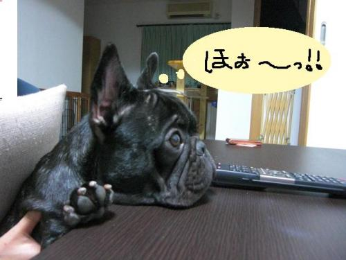 CIMG1501_convert_20110828224734.jpg