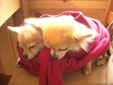 ママしゃんのセーターに包まれて