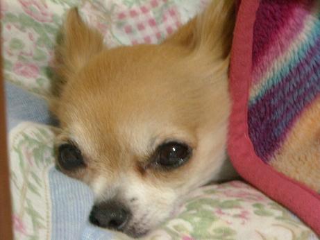もう眠いでしゅいsた(^_-)-☆2月23日