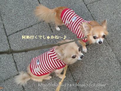 おしゃんぽ10月1日1 - コピー