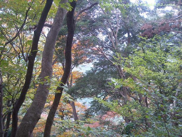 2010年高尾山パート2-2