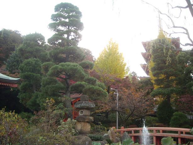 11月16日菊祭り28