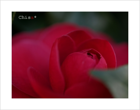 c316c.jpg