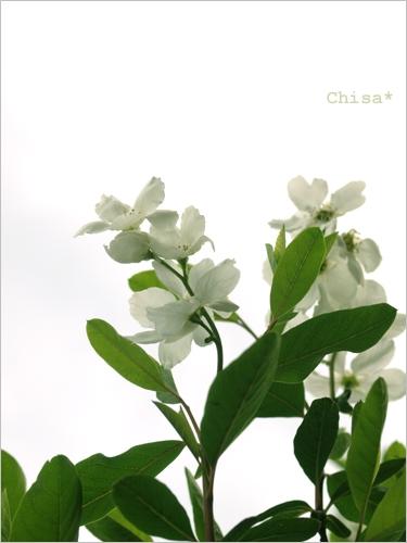 c369b.jpg
