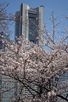 3_21桜3