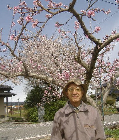 長谷川先生と桜・桃
