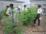ブルーベリー収穫期調査(竹田・山本・杉林・坂本)