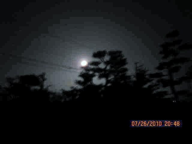 双幹の松に水無月満月